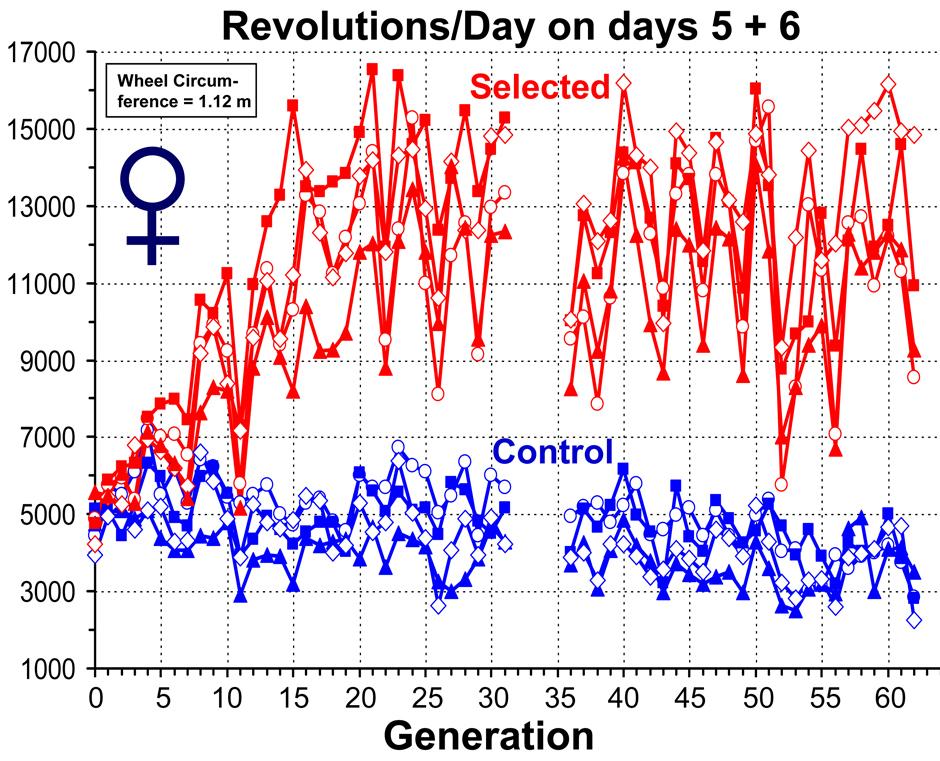 Graph: Female Runs